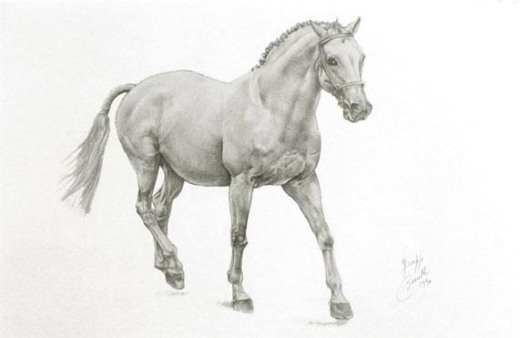 Studio di cavallo arabo per l 39 opera gli amici di menelao for Cavallo disegno a matita
